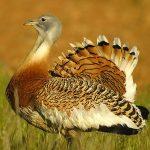 Avistamiento de aves en cáceres