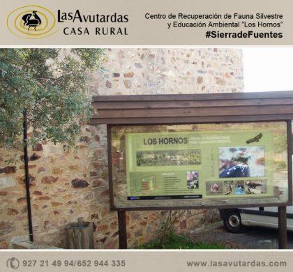 """Visita el Centro de Recuperación de Fauna Silvestre y Educación Ambiental """"Los Hornos"""""""