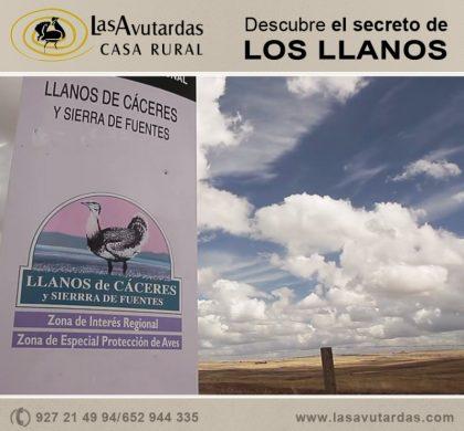 Descubre nuestro entorno, los Llanos de Cáceres